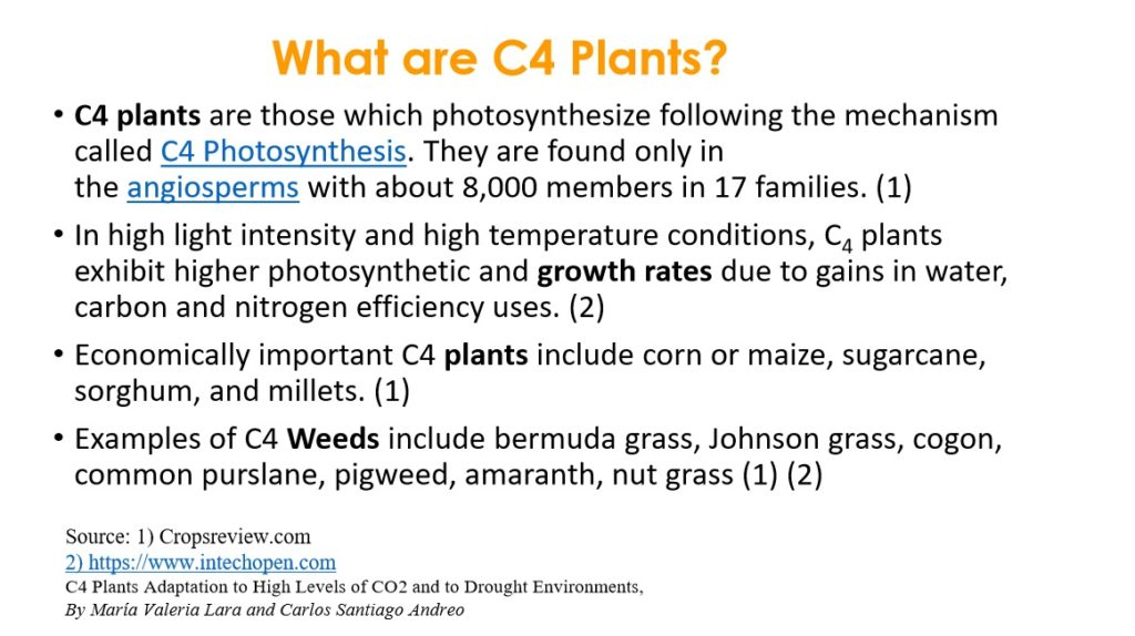 C4 Plants in a Changing Climate
